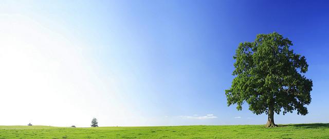 Umweltbewusstes Business Reisen